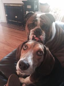 and last but not least....don't forget to meet our children! {Shady & Barkley}